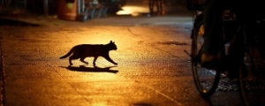 Cat-Crossing-The-Road-Streets-Images-540x303